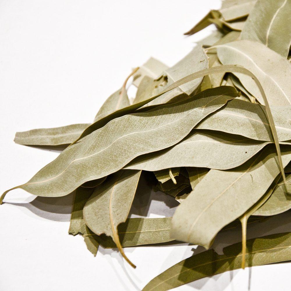 Cretan Eucalyptus leaves