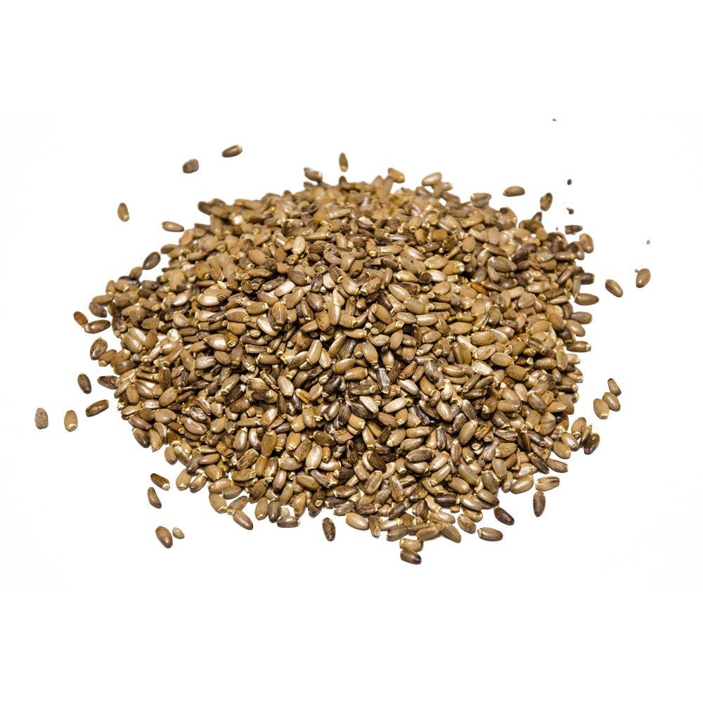 Milk Thistle seeds | Silybum marianum