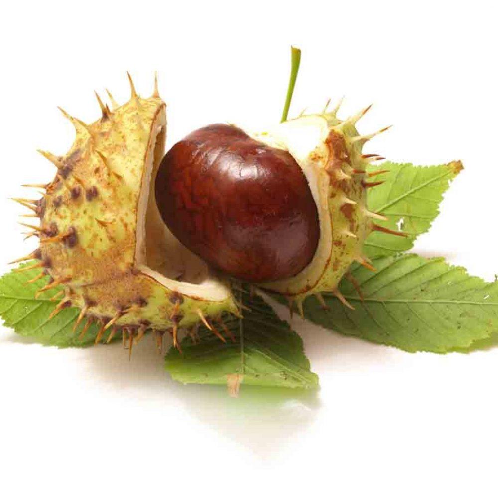 Масло конского каштана (Horse Chestnut Oil)