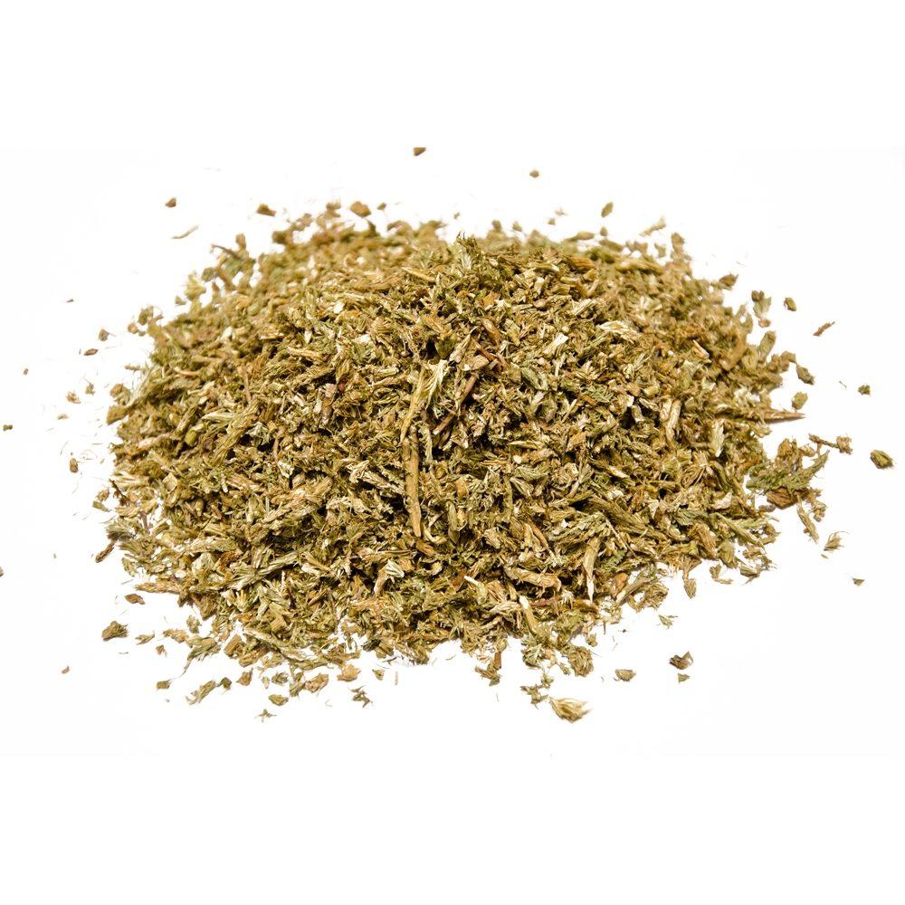 Club moss (Lycopodium clavatum)