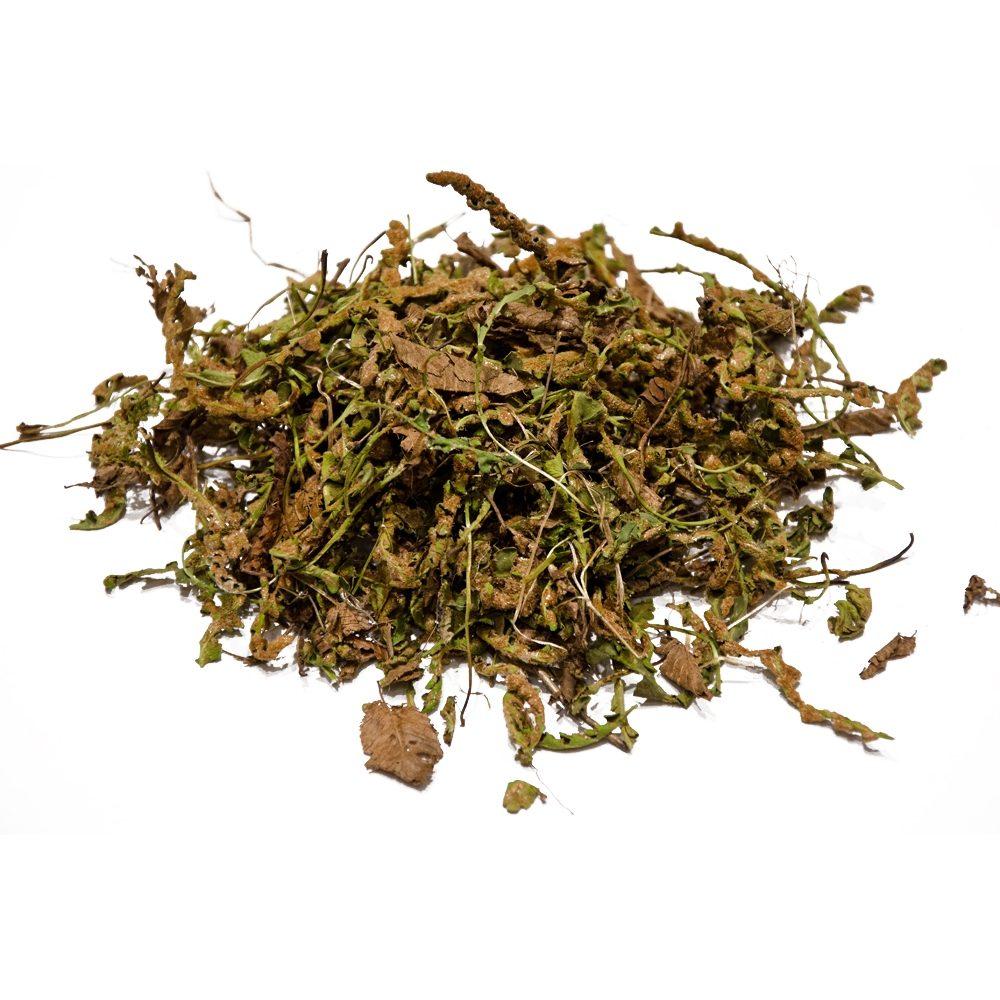 Rusty back (Ceterach officinarum or Asplenium ceterah)